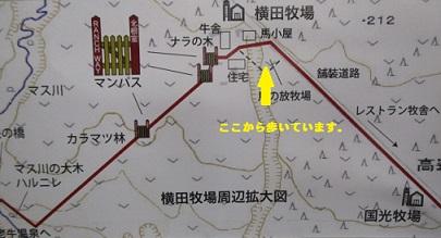 tizu8  555.jpg