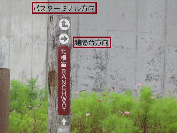 kaiyoudai.jpg